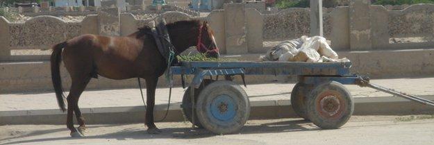 A horse standing, facing a cart