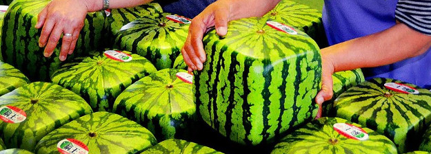Square Watermellons